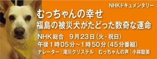 NHK-muchan.jpg